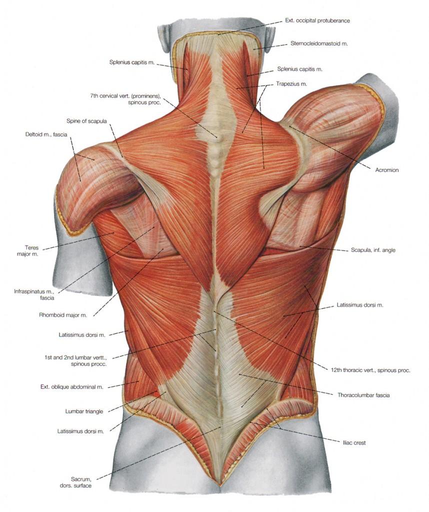 Cervical spine injuries