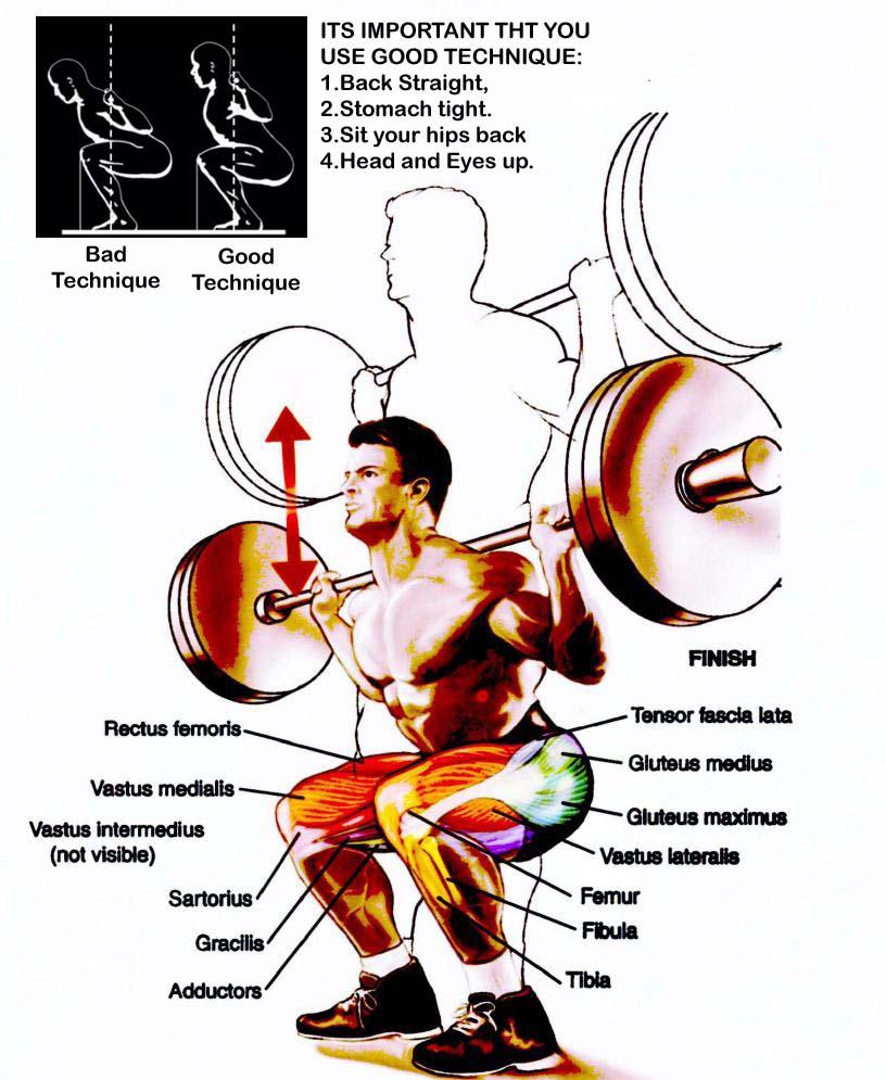 back_squat-technique